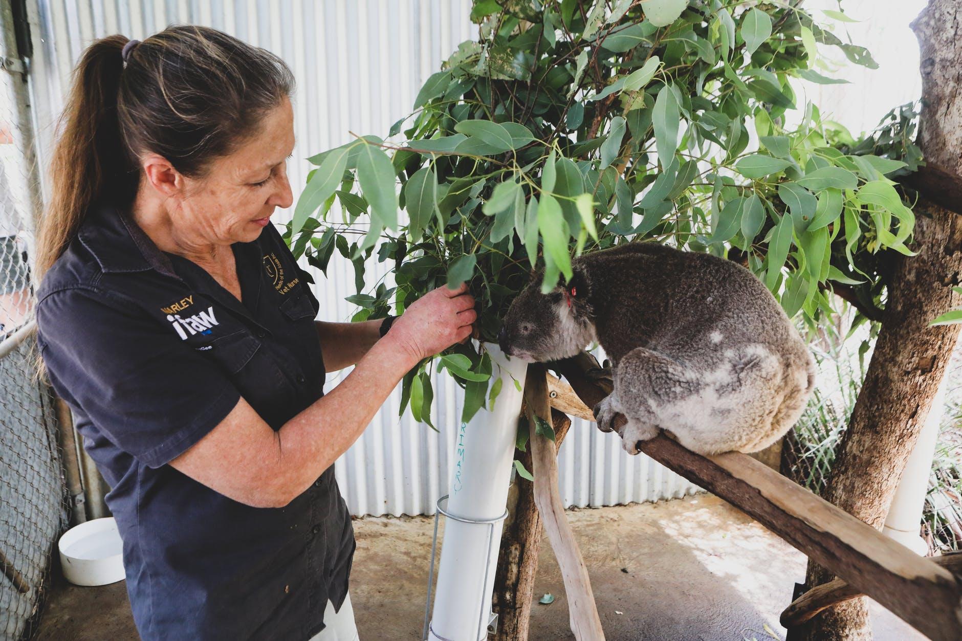 woman with a koala