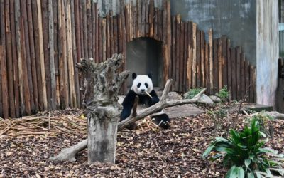 Chengdu with kids | Things to do in Chengdu