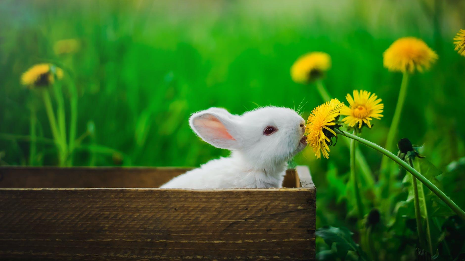 white rabbit in brown wooden box